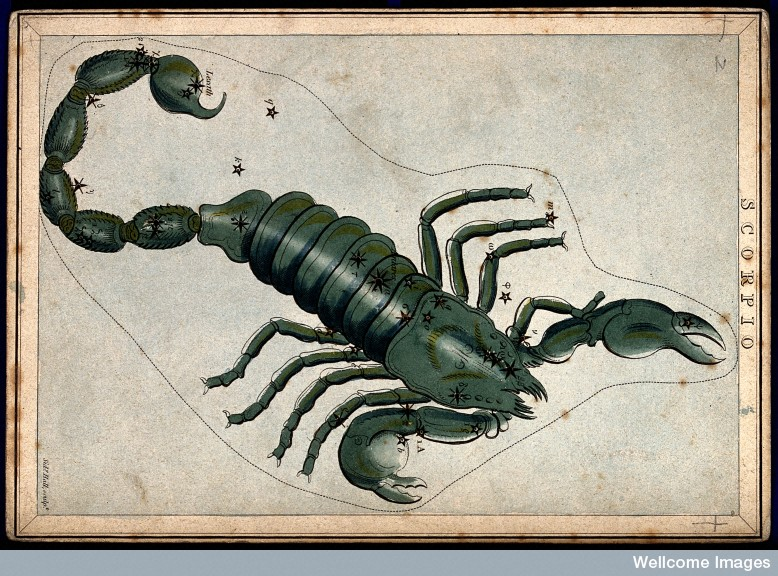V0024929 Astrology: signs of the zodiac, Scorpio. Coloured engraving.